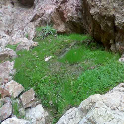 سرسبزی در کوه زرمو چوپانان